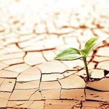 La crisis como oportunidad